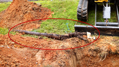 Gary Robinson worked diligently to clear this massive root from a sewer line that was about 6 inches in diameter and completely filled the sewer pipe blocking all flow out of the home.